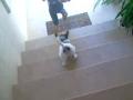 Já sei descer a escada!!!