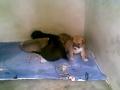 cachorrinhos com 3 semanas