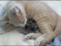 Uma família diferente: Gato adopta ave
