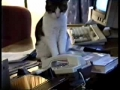 Gato atende o telefone