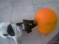 A brincar com  o balão