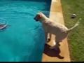Tica e a piscina