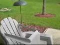 Um esquilo confuso