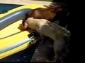 Leão e o barco de borracha
